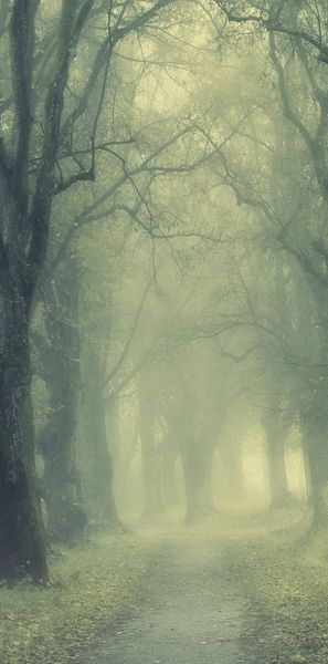 "Foggy Hazel Tree-Lined Path – ""End of November"" by Norbert Maier   