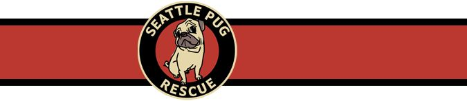 the Seattle Pug Rescue