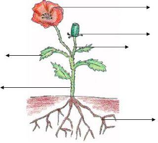 Blog de los niños. Partes de una planta para completar.