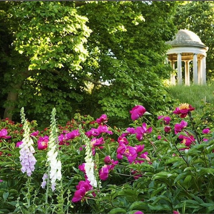 What a lovely combination of foxgloves and rich cerise peonies! This is a view of the Temple of Aeolus in Kew Gardens. Aeolus in Greek mythology was keeper of the winds. 📷Sheila Sim Photography #gardendesign #gardendesigner #gardeninpsiration #gardensofinstagram #instagarden #instaflower #flowersofinstagram #flowerstalking #peonies #foxgloves #kewgardens @kewgardens #botanicalgarden #beautiful