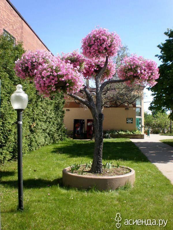 Вертикальные клумбы из петуний в виде деревьев.