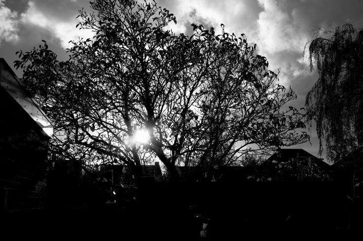 Backyard Autumn 2013 - Uitgeest - Miranda Termaat