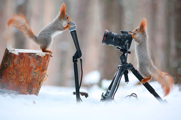 Ardilla y un ave en sesion de fotos en Rusia    ~ Udever