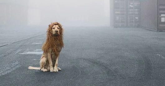 Un povero cane abbandonato si trasforma nel Re Leone che è sempre stato