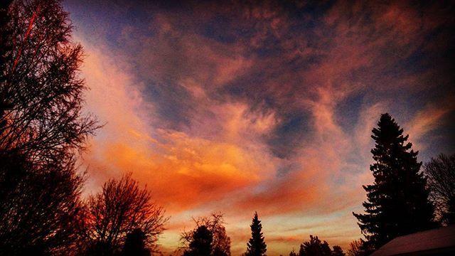 Goodnight😘 #natur #nature #skog #forest #träd #träd #sol #sun #himmel #sky #moln #clouds #solnedgång #sunset #kväll #evening #färger #colors #skugga #shadow #blå #blue #svart #black #orange