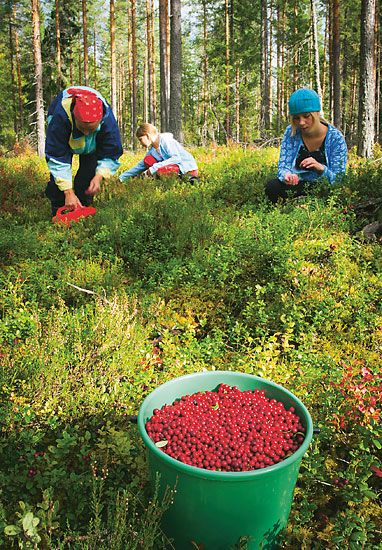 Finnish cuisine's natural flavours put Finland on the gastronomic world map. Take a tasty tour, complete with recipes.