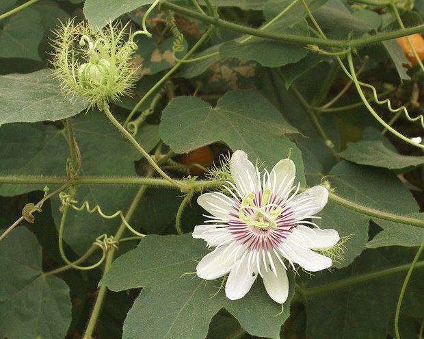 Gallery: Aboriginal bush medicines - Australian Geographic