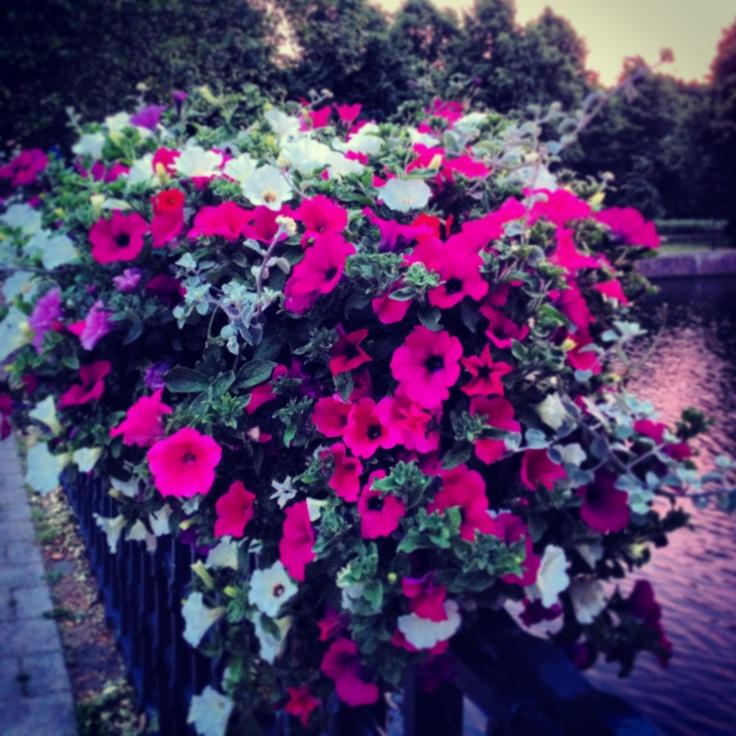 Flowers in Amsterdam