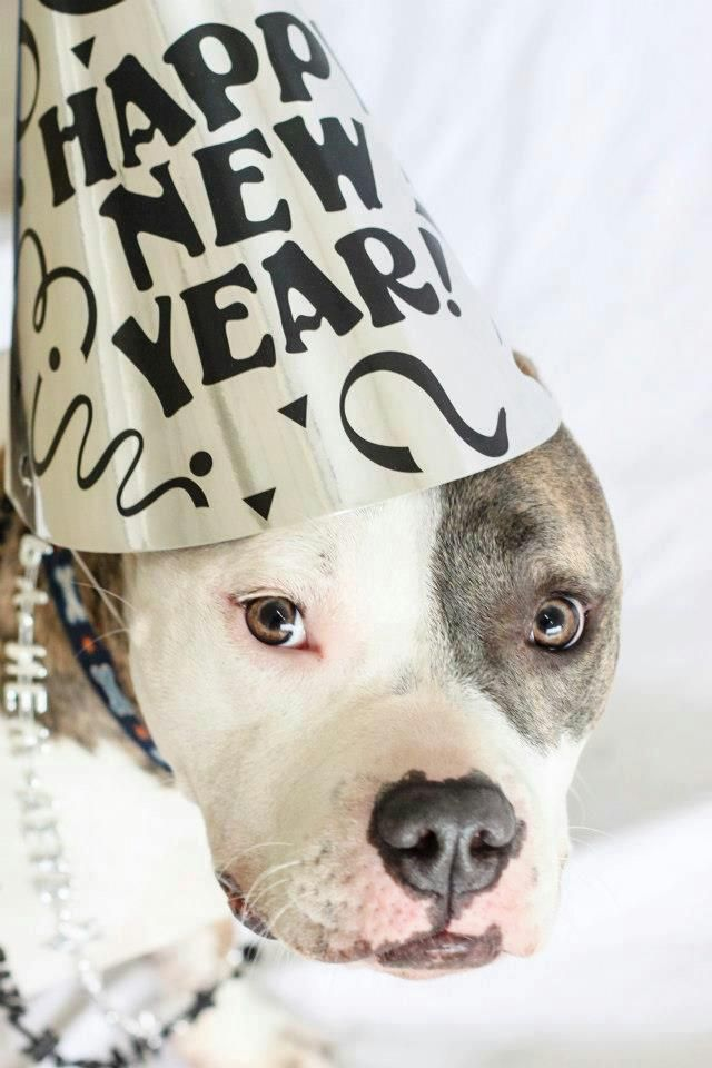 437 best Pitbull♥ punish the deed not the breed! images on ...