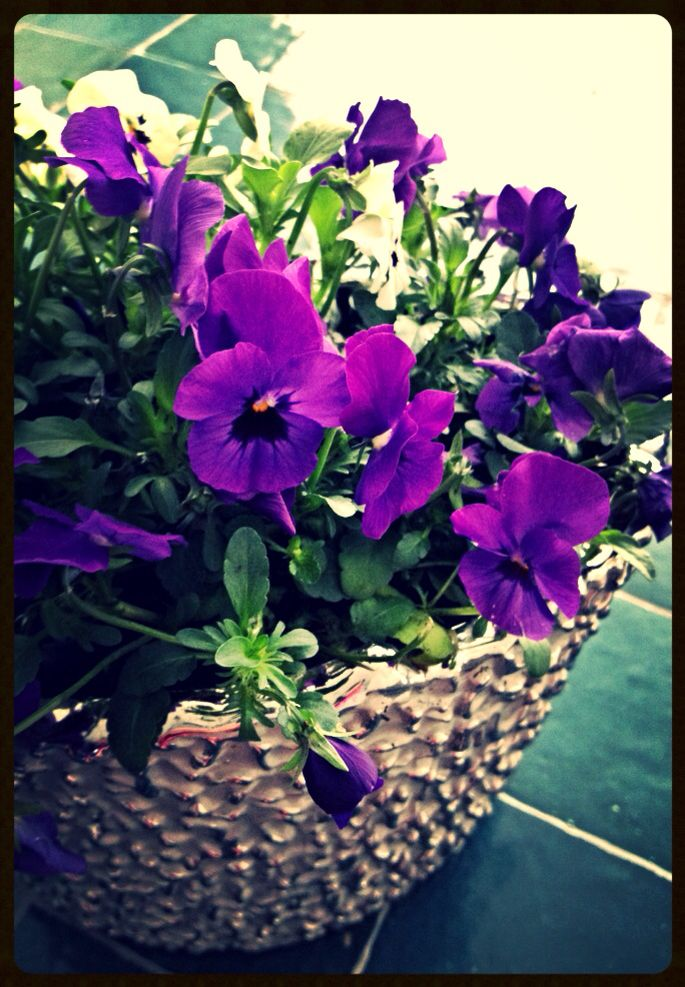 Violets, Lounge Table from Collection Steel N Stone