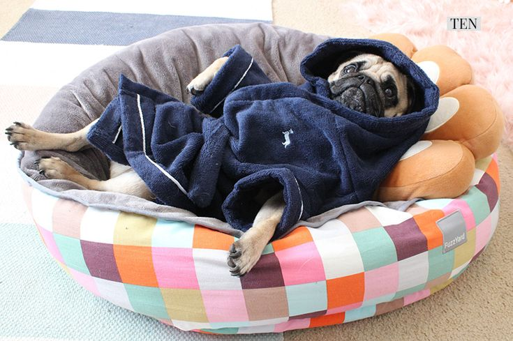 2017 Holiday Gift Guide for Pugs: The Fashionista http://www.thepugdiary.com/2017-holiday-gift-guide-pugs-fashionista/