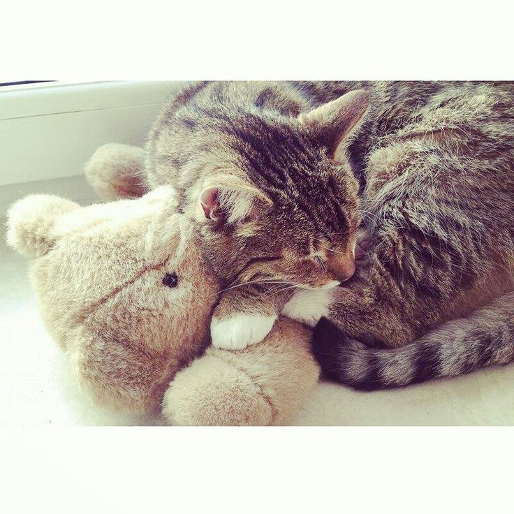 furry love ♡ #cat #pet