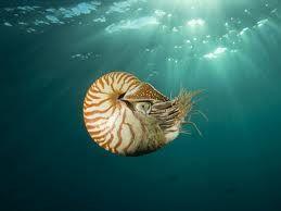 Nautilus at sea