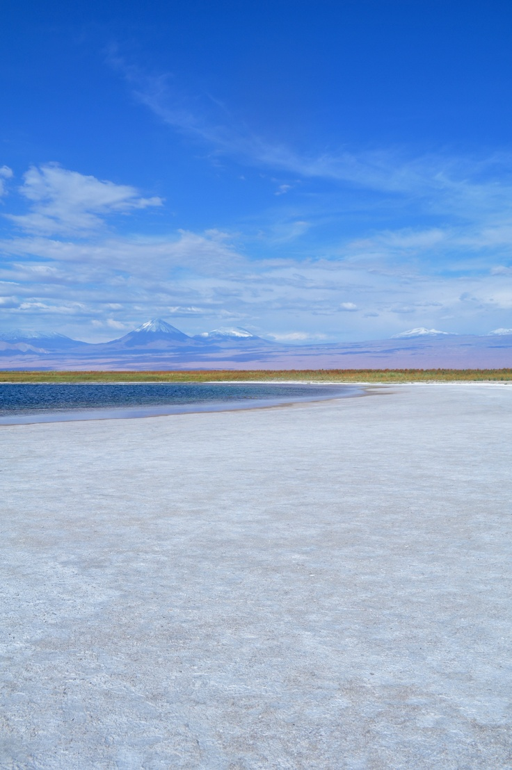 Laguna Cejar | Atacama