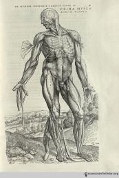 Vesalius_Fabrica_1543_Lambert_181_watermark