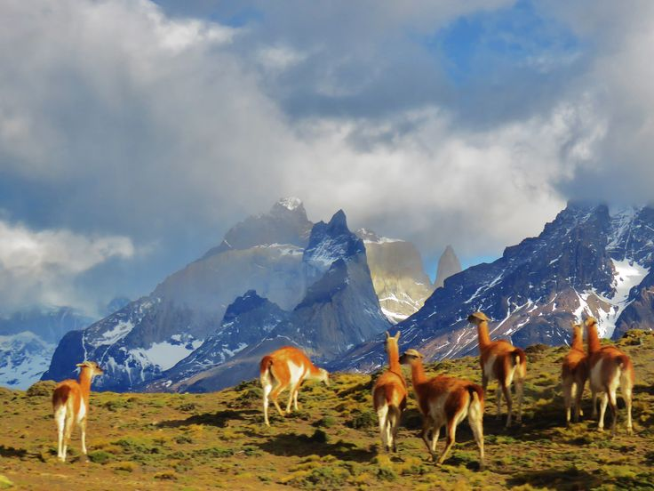 patagonia , torres del paine national Park