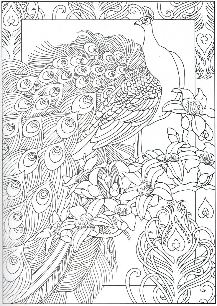 Peacock coloring page 2931 Color