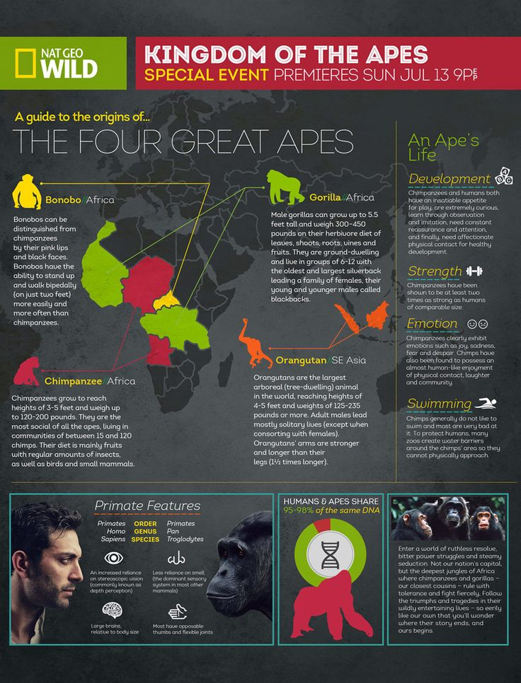National Geographic - Infographics - Justin McClure Creative