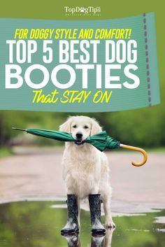 Top 5 Best Dog Booties for Dogs That Stay On. A trend that's on the rise right now is finding some of the best dog booties to protect canine's paws from snow, ice, heat, cold and salt. Many pet owners have chosen to go full-time with using dog walking boots daily, and surprisingly their pets don't seem to mind. #dogboots #boots #pets #dogs #dogshoes