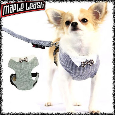 Bowtie Harness Set-For your dapper dog :) http://www.mapleleash.com/collections/harnesses/products/bowtie-harness-set
