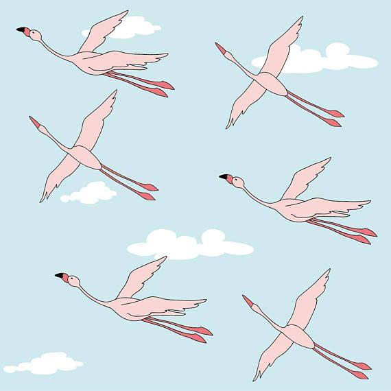 libertà di volare.....fenicotteri in cielo