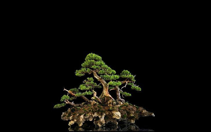 Tree Bonsai Black Hd Green Tree Nature Hd Wallpaper Black Bonsai Green Nature Tree Wallpaper Bonsai Tree Bonsai Art Bonsai Forest
