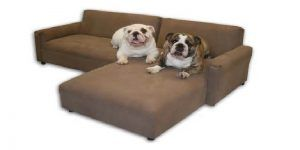 Awesome Best Couch For Dog Owners , Great Best Couch For Dog Owners 82 For  Living