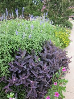 "Signature Gardens: Survivor: Texas (Garden Edition) ""purple heart"""