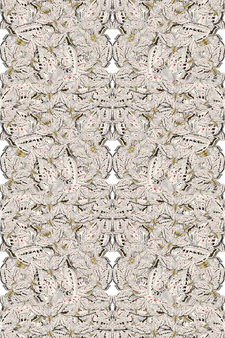 Timorous Beasties Wallcoverings - White Moth Allover Solid Wallcovering