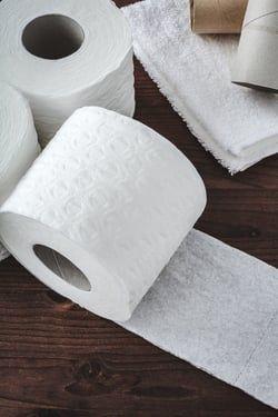Les rouleaux de papier toilette pour réussir ses semences