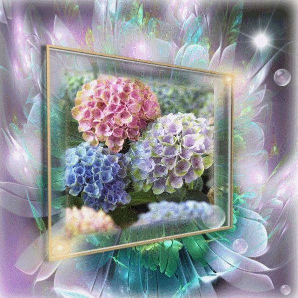 Výsledok vyhľadávania obrázkov pre dopyt gif hortenzia