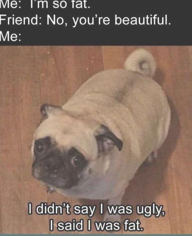 Dog Memes Of The Day 30 Pics Ep29 Dogs Dogmemes Memes Lovelyanimalsworld Lovely Animals World Funny Friend Memes Funny Memes Comebacks Pug Memes