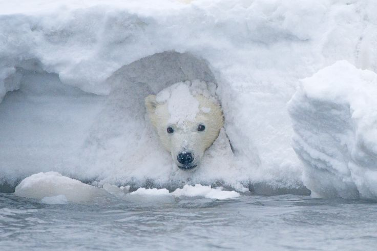 Lisa Murkowski Introduces Bill To Open Arctic Wildlife Refuge To Oil Drilling | HuffPost