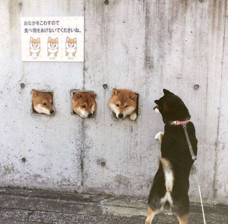 "Shibes on Twitter: ""https://t.co/c8sch6mGwC"""