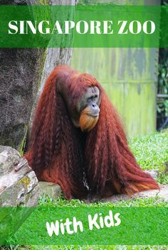 The Singapore Zoo is