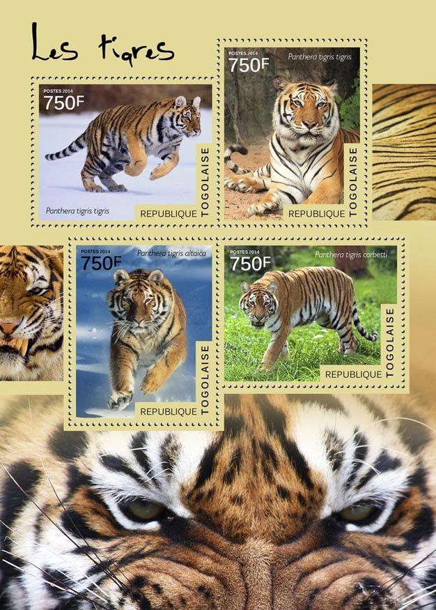TG 14521 aTigers (Panthera tigris tigris, Panthera tigris altaica, Panthera tigris corbetti)