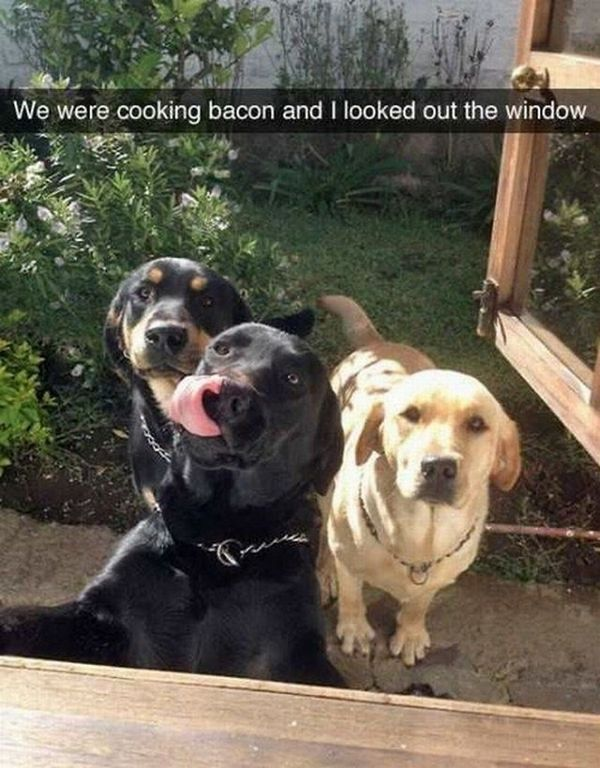 Today Top Funny pictures (09:45:41 PM, Saturday 26, November 2016 PST) – 51 pics