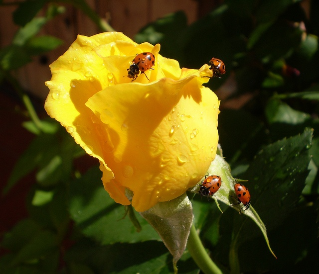 lady bugs bees flowers - photo #31