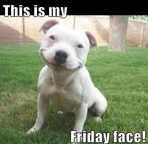 9da9ea1457574ffb66970164a74f8910 smiling dogs keep smiling 38 best happy friday dogs! images on pinterest animals, funny,Friday Dog Meme
