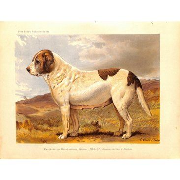 Check out this item at One Kings Lane! St. Bernard, C. 1885