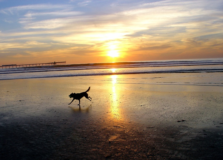 Dog Beach Sunset 2