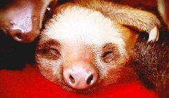 Funny Sloth Puns Funny Gif #6171 - Funny Sloth Gifs  Funny Gifs  Sloth Gifs
