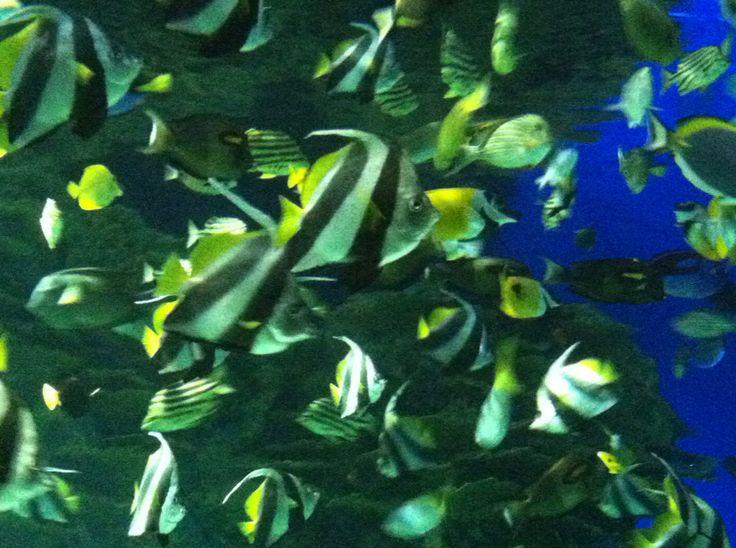 Coupons for ripley's aquarium gatlinburg tn