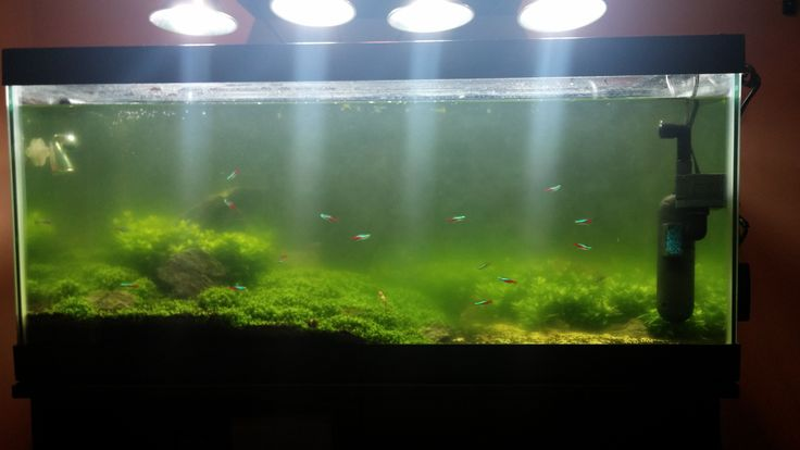 28 best images about aquathusiasm on pinterest fish for What causes algae in fish tanks