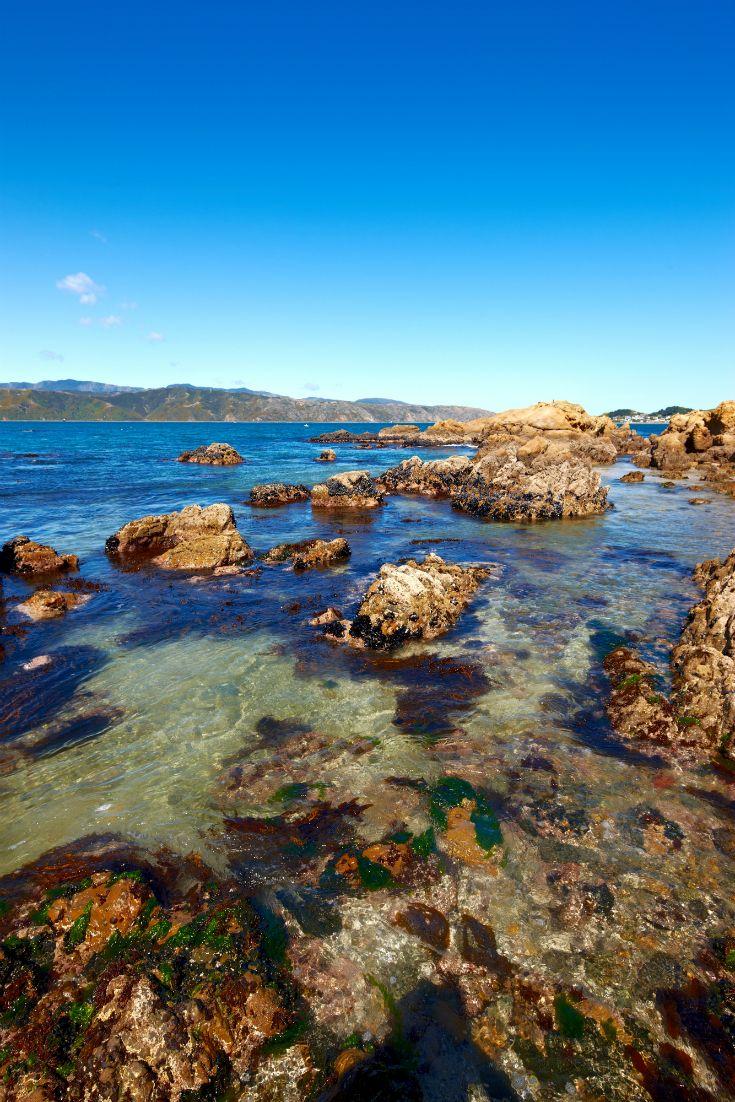 Karaka Bay in Wellington on the North Island. #NewZealand