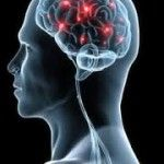 The Human Brain http://www.englishok.com.br/using-the-neurological-cognitive-process-for-learning-english/