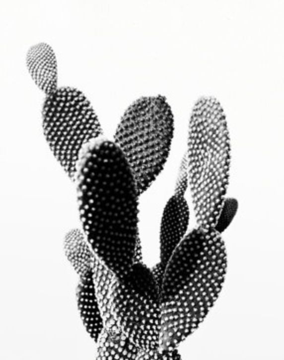 Cactus Photo Printable File, Cactus Landscape Black And White - Modern Wall Art, Home Office Decor  Etsy