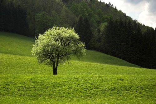 Puterea rugaciunii in vindecarea naturala