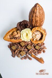 how-to-host-chocolate-tasting-4