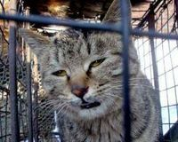 Urge China to introduce an Animal Protection Law-Cats are being tortured by the thousands and slaughtered in the streets for meat. They are being held in small cages in open air markets where they are beheaded . Please sign and protest all Chinese products